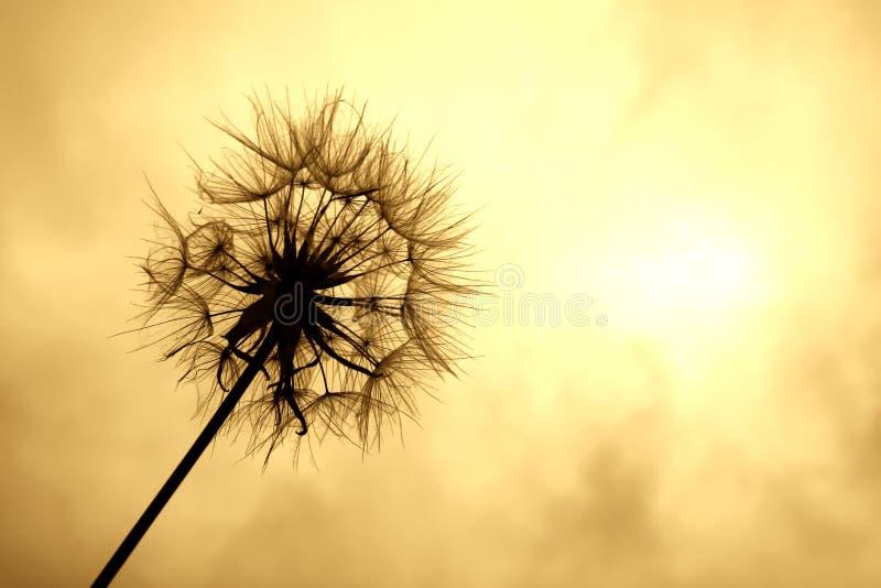 En Al Sol Fotos de archivo libres de regalías