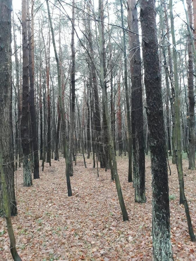 En alguna parte en Polonia, el parque es una estación del otoño imagen de archivo