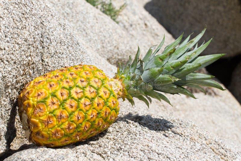 En ananaslögn på stenen Fruktisolat arkivbild