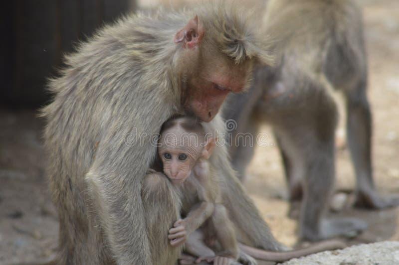 En apa med dess barn royaltyfri foto
