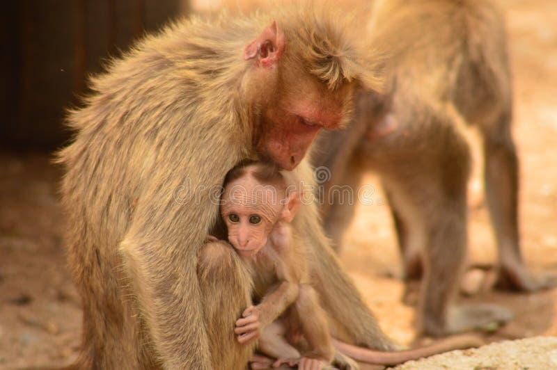 En apa med dess barn royaltyfri bild