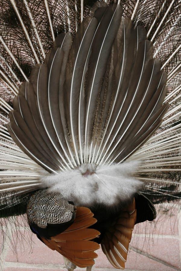 En arrière de l'oiseau photo libre de droits