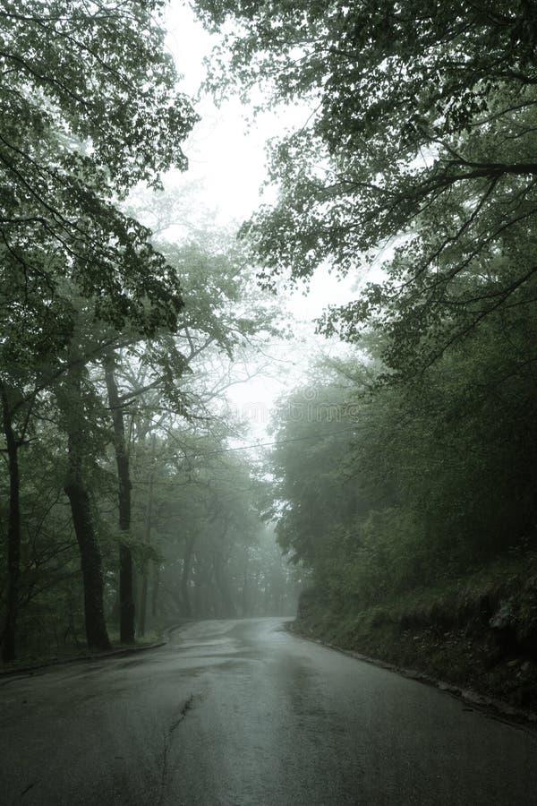 En asfaltv?g som g?r till och med en smal v?g Montenegro f?r dimmig m?rk mystisk pinjeskog och gr?na tr?d arkivbilder