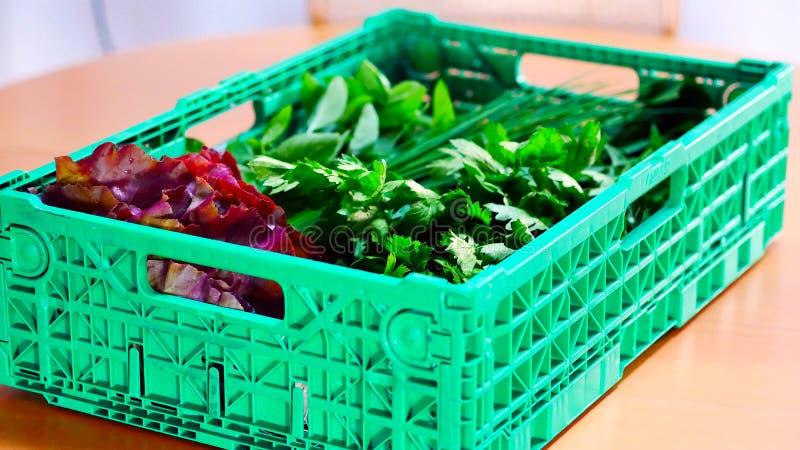 En ask fyllde med nya sallad och grönsaker från lokalen, organiskt lantbruk fotografering för bildbyråer