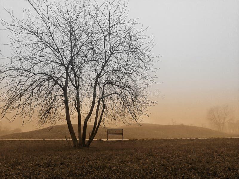 En bänk bredvid ett träd fotografering för bildbyråer