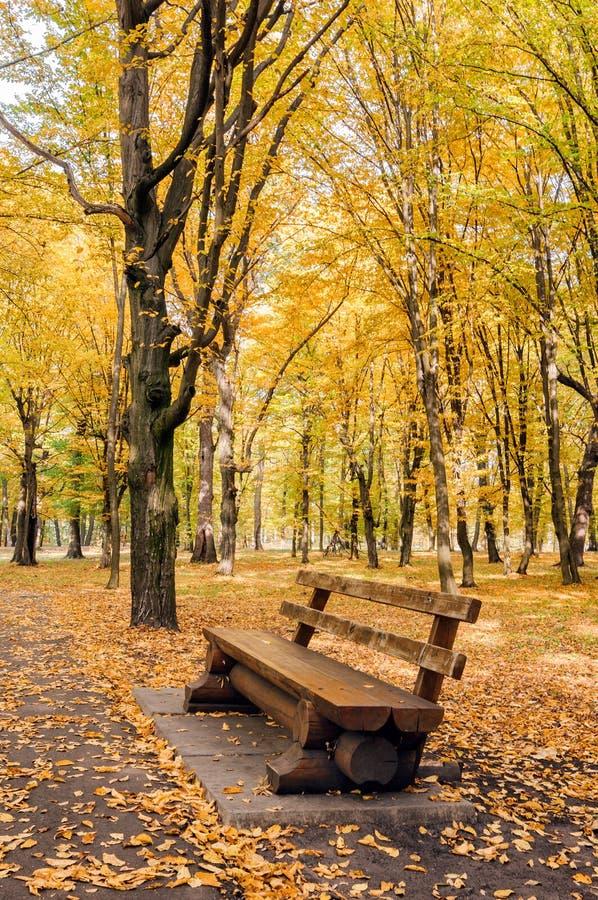 En bänk i hösten parkerar bland guling- och gräsplanträd royaltyfria foton
