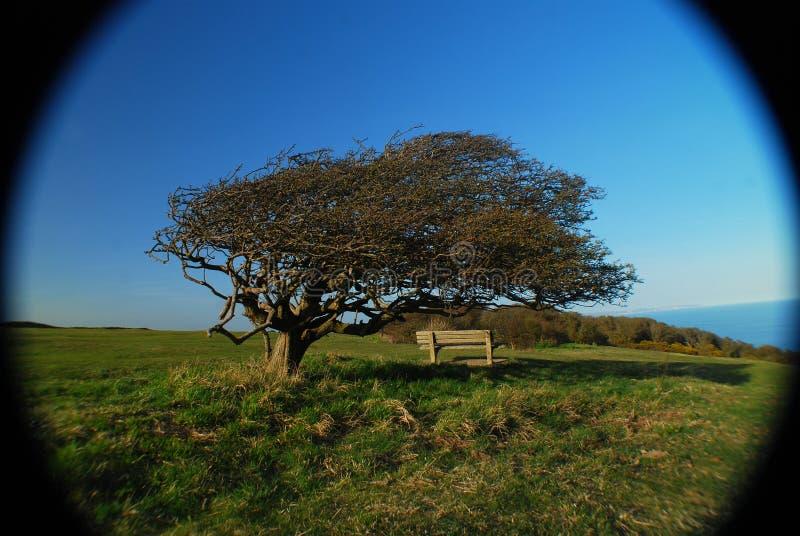En bänk under en tree i södra England, UK arkivbilder