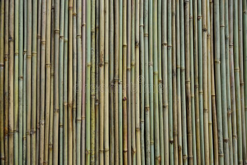 En bambuvägg, eller flera vertikala raka bambupinnar och texturer arkivfoton