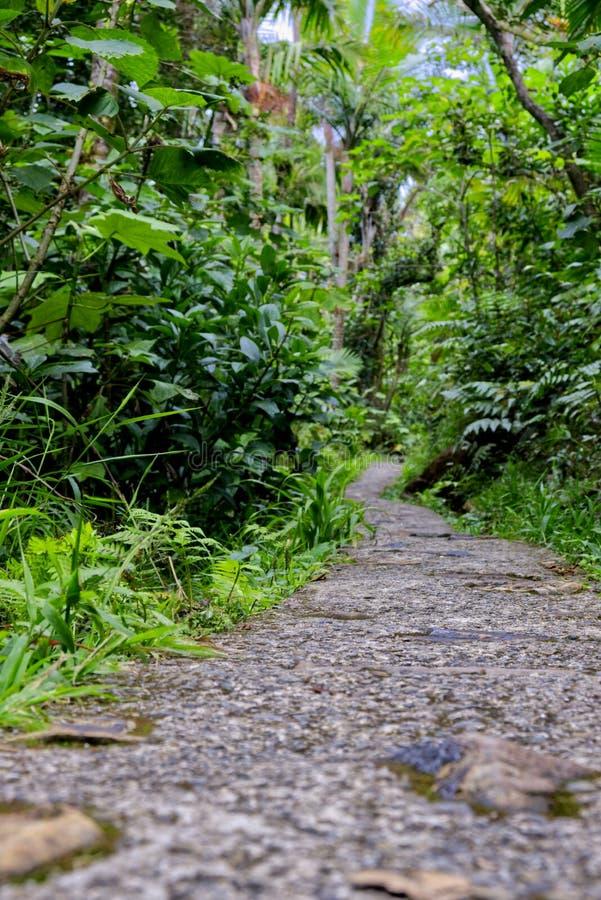 En bana i rainforesten arkivbild