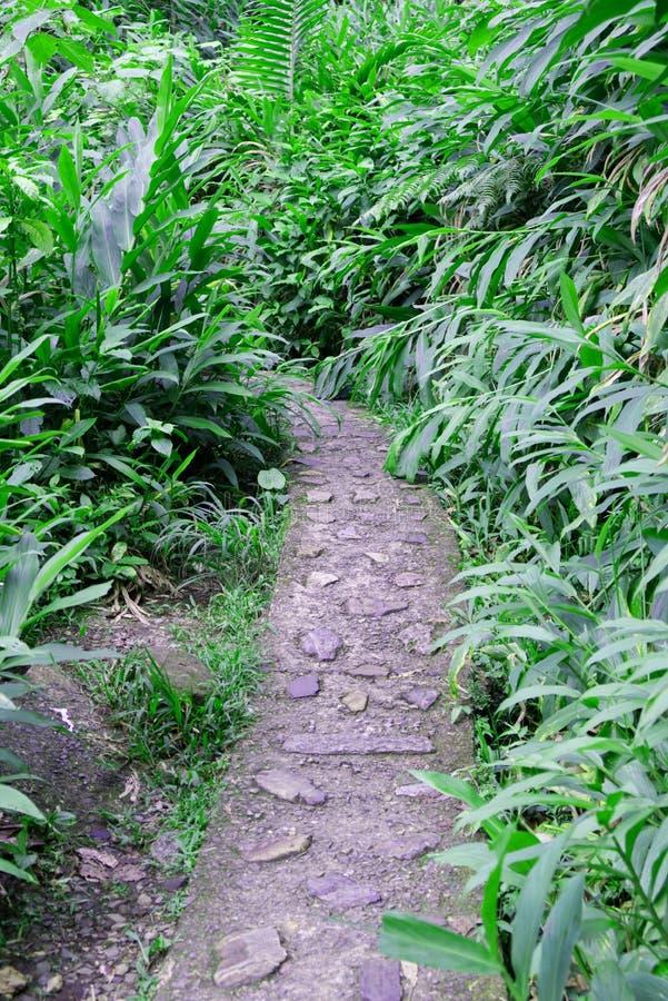 En bana i rainforestsna på PR royaltyfria bilder