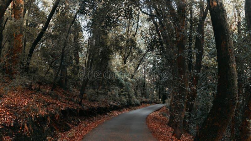 En bana i skogen arkivfoton