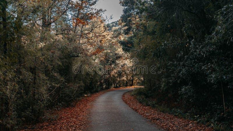 En bana i skogen royaltyfri bild