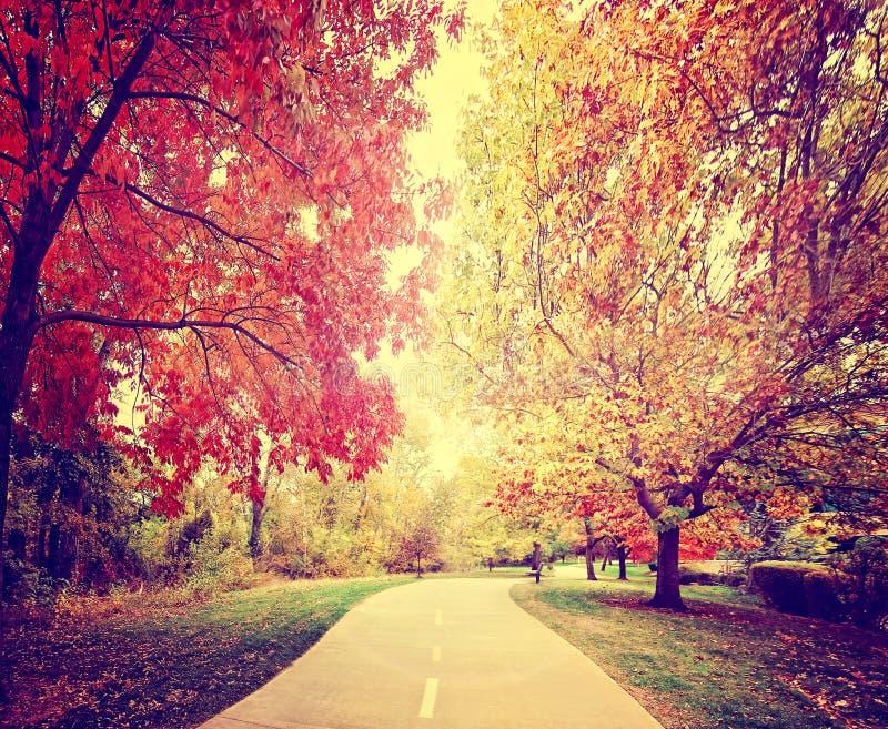 en bana som går fast en skog eller, parkerar med träd med höstsidor arkivfoto