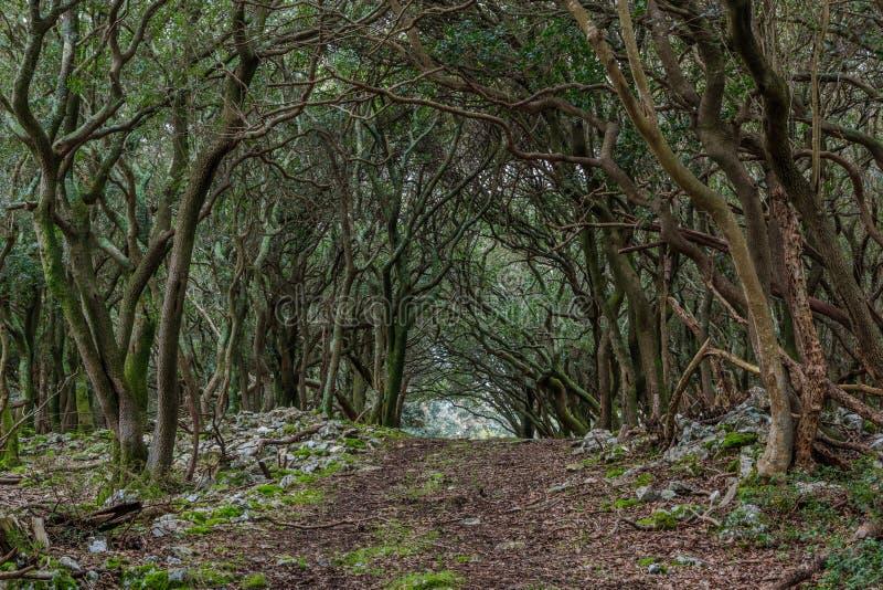 En bana till och med den förtrollade skogen på ön för `-velikiBrijun ` royaltyfria bilder