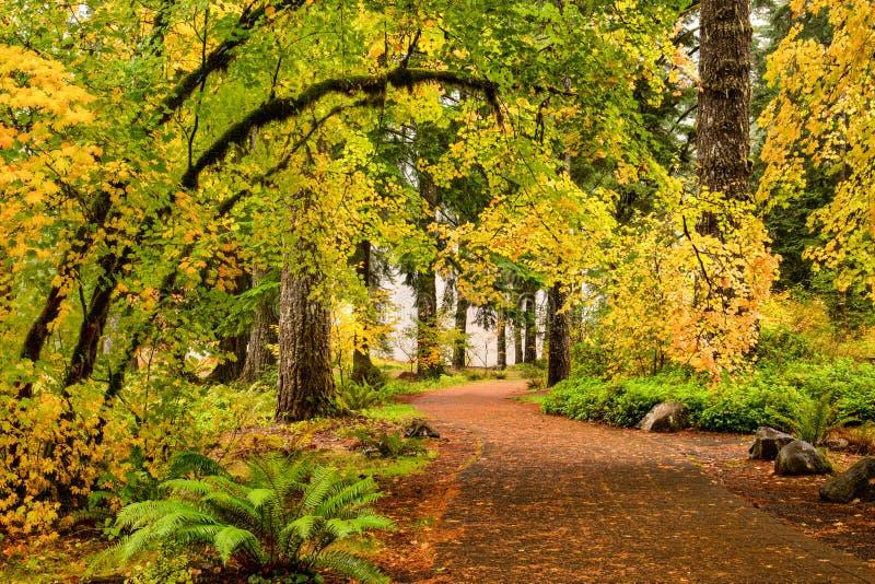 En bana till och med höstlövverkskog i silver faller delstatsparken, royaltyfria foton
