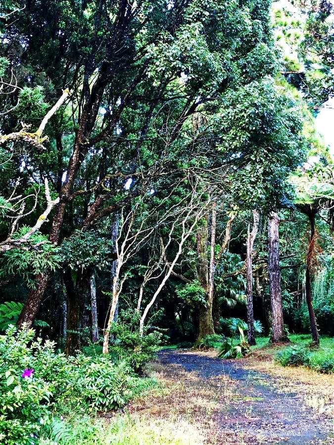 En bana till och med skogen, Mauritius Island arkivfoton