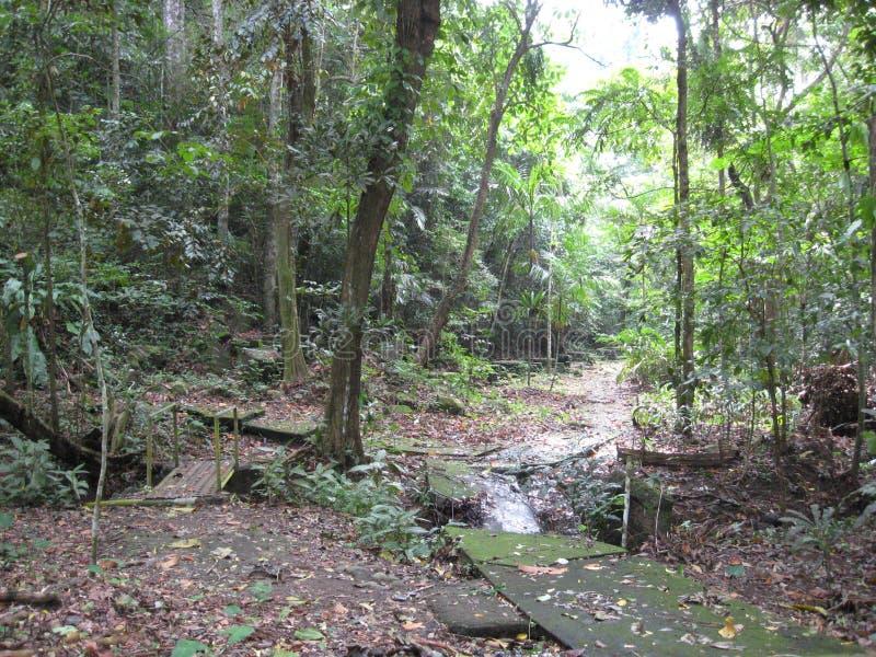 En bana till och med skogen på Makiling botaniska trädgårdar, Filippinerna royaltyfri fotografi