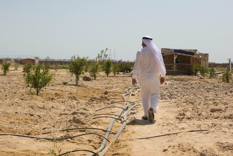 En beduin- man i hans lantgård i öknen av sinai, Egypten royaltyfri bild