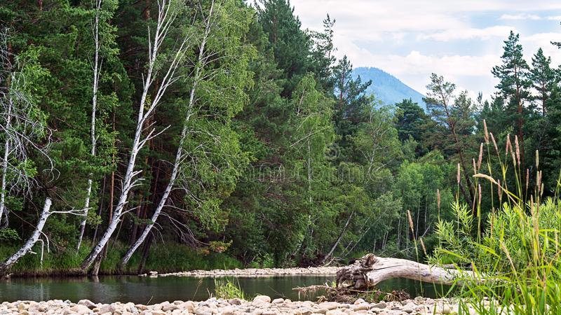 En bergflod på foten av kullen med gröna träd, vit fördunklar på blå himmel, Altai berg, Kasakhstan royaltyfri bild