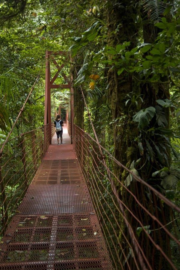 En besökare korsar en upphängningbro i det Monteverde molnet Forest Reserve arkivfoton