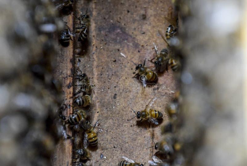 En bikupa, en sikt från insidan Bi-förlägga i barack biet detailed honung isolerade makroen staplade mycket white Ingång till bik royaltyfri bild