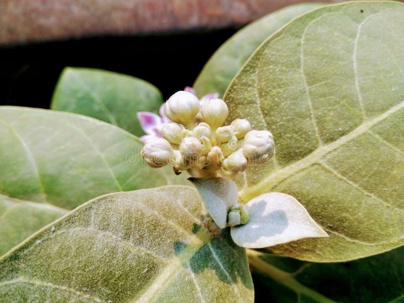 En bild av blommaknoppar fotografering för bildbyråer