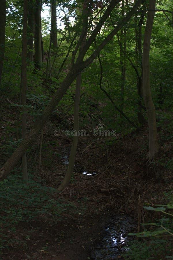 En bild av ett träd som har stupat over och som fångar på ett annat trädanseende bredvid en liten skogliten vik royaltyfri foto
