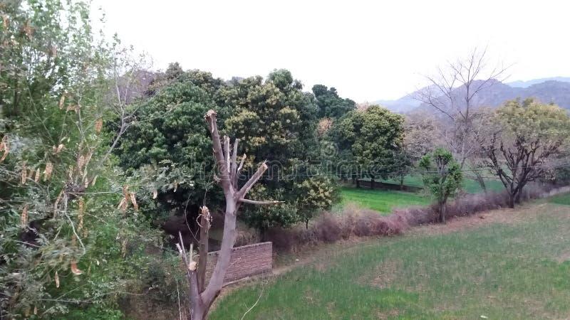 En bild av fält arkivfoton