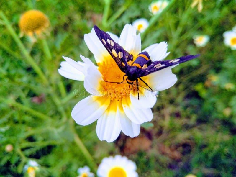En bild av fjärilen i blomma, arkivfoto