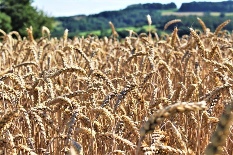 Download En Bild Av En Landssida - Tyskland Fotografering för Bildbyråer - Bild av lantligt, härlig: 106838873