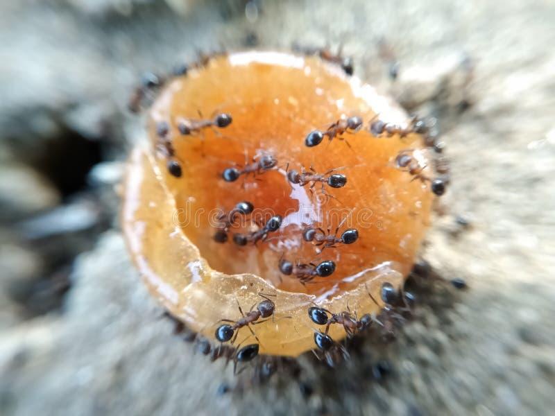 En bild av små myror royaltyfria bilder