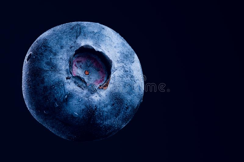 En blåbärcloseup som isoleras på mörkt - blå bakgrund antioxidantbegrepp arkivbild