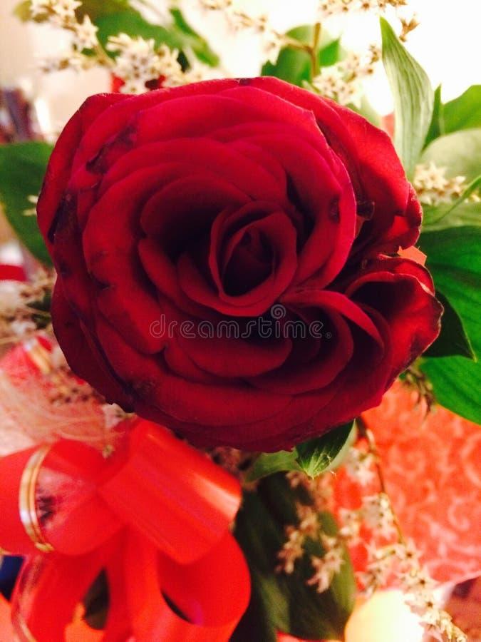 En blomma av förälskelse royaltyfri bild