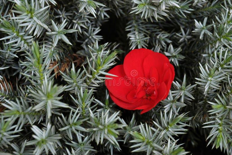 En blomma bland taggar fotografering för bildbyråer