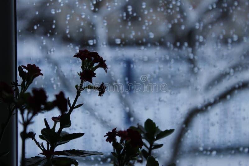 En blomma på fönstret arkivfoto