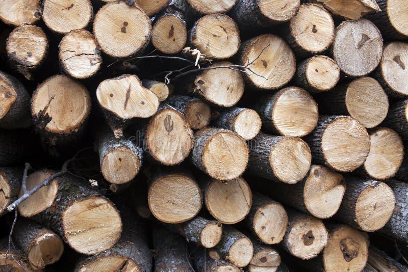 En bois préparez pour être pris de la forêt photos stock