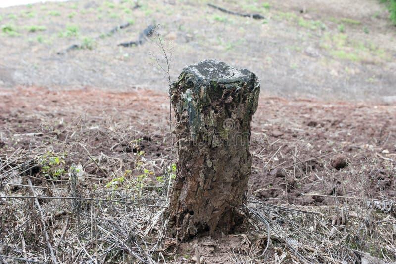 En bois putréfié cassé photographie stock libre de droits