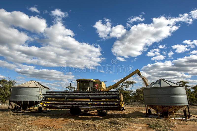 En bonde överför en påfyllning av vete från hans skördearbetare in i en fältsilo royaltyfri bild