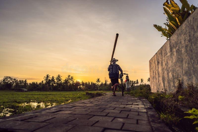 En bonde med en cykel och en bambu går i en risfält arkivbild