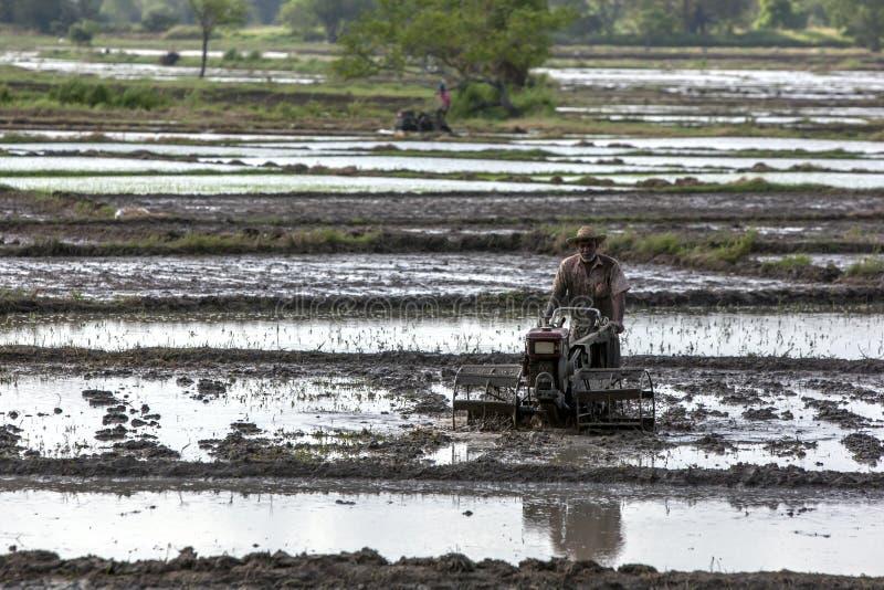 En bonde pl?jer ett risf?ltf?lt i Sri Lanka arkivbilder