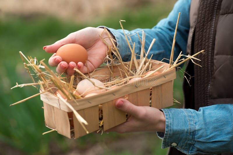 En bondehand som rymmer ett nytt brunt hönaägg och andra ägg i a arkivfoton