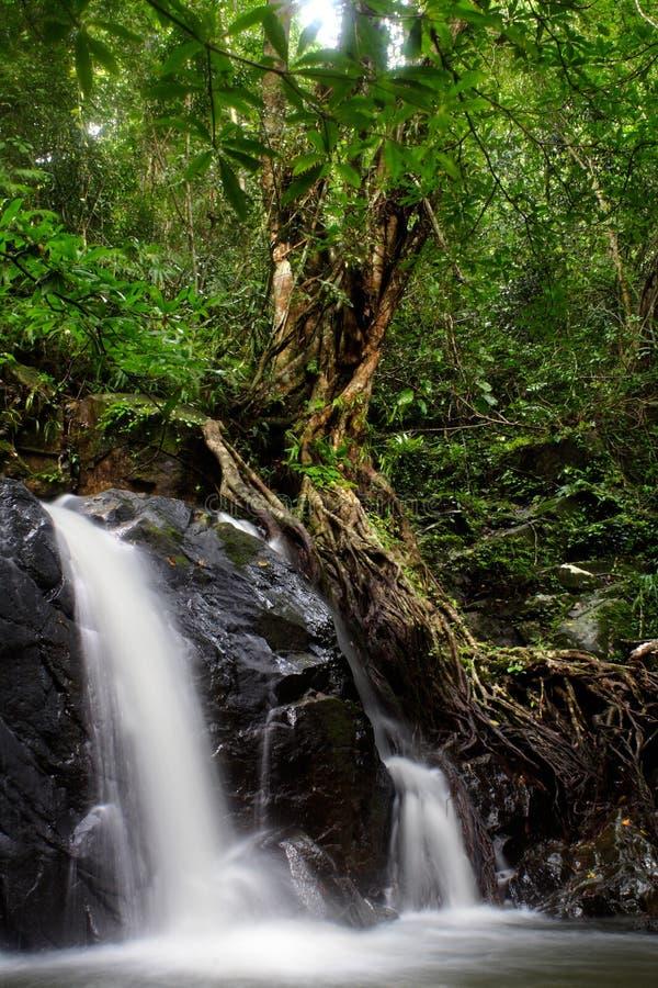 En bosques húmedos fotografía de archivo libre de regalías