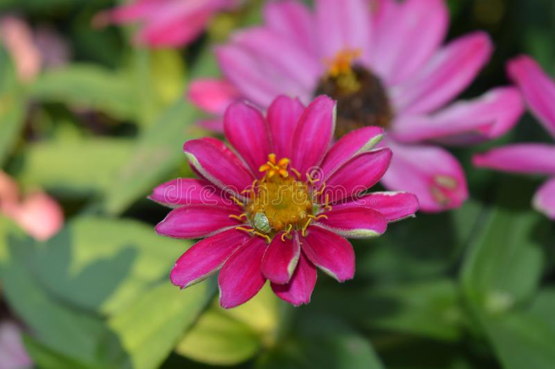 En bra blomma i natur royaltyfria bilder