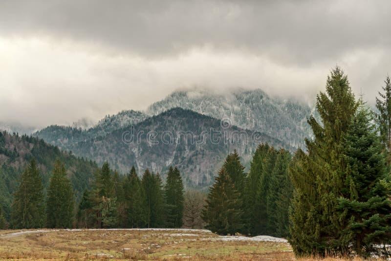 En bra dag för att gå i bergen i vinter under enorma träd fotografering för bildbyråer