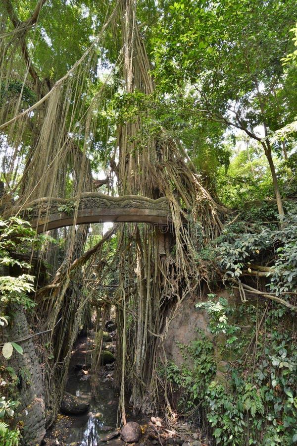 En bro i den apaskogPadangtegal byn Ubud _ Indonesien arkivbild
