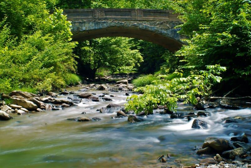 En bro i skogen royaltyfri foto