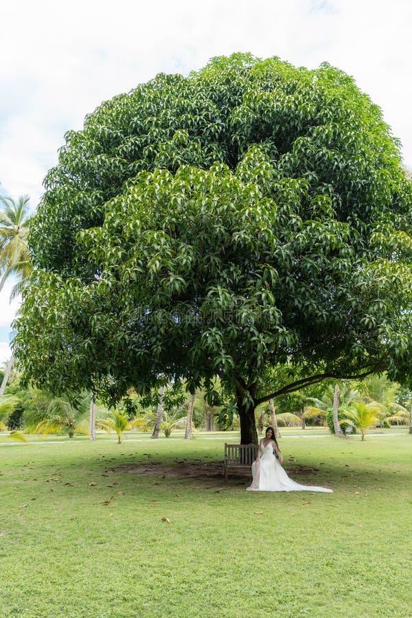 En brud i en vit klänning sitter på en gammal bänk under ett enormt tropiskt träd royaltyfria bilder