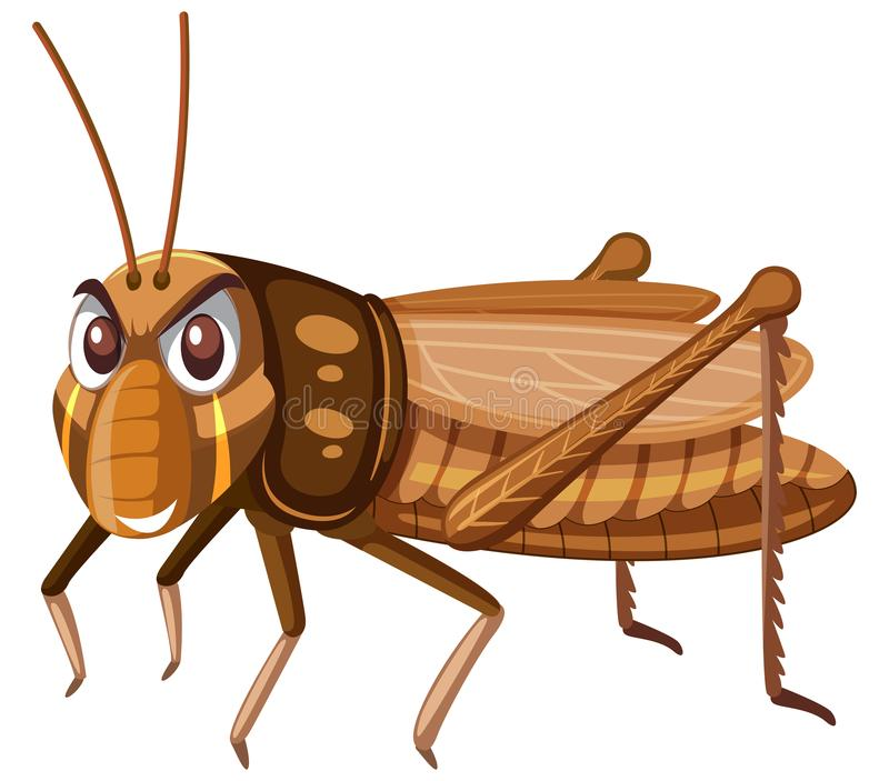 En brun gräshoppa på vit bakgrund royaltyfri illustrationer