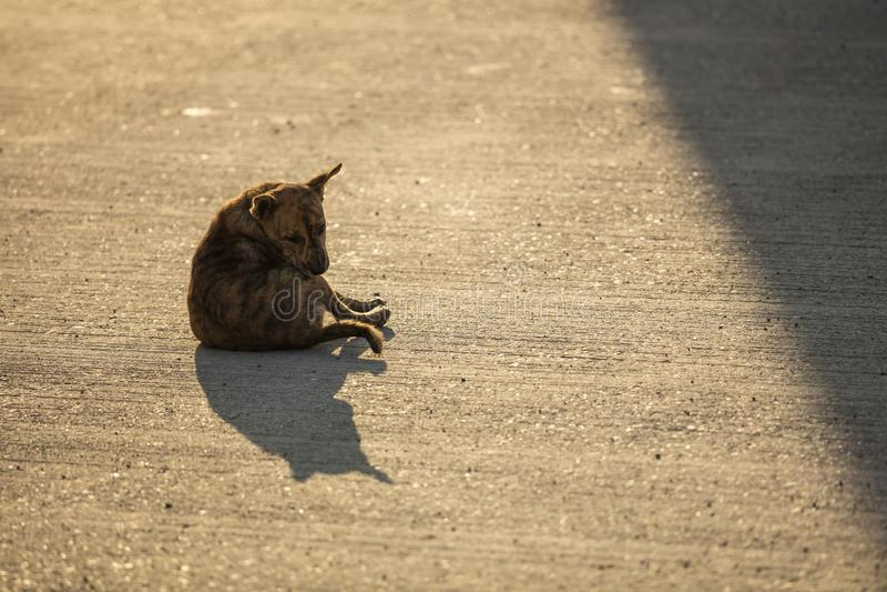 En brun hemlös hund på vägen med solljus arkivbild
