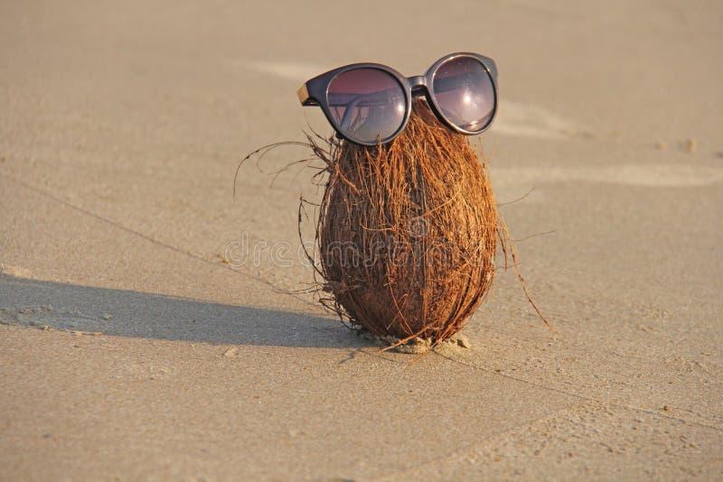 En brun kokosnöt med solglasögon, på stranden och på havet, ag fotografering för bildbyråer